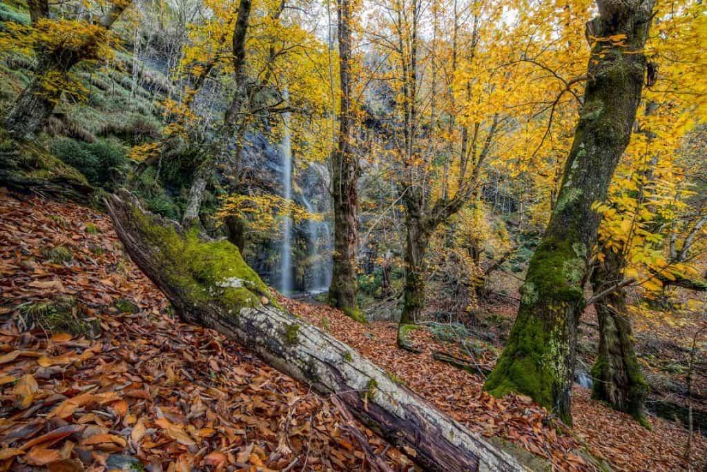 bosco di castagni