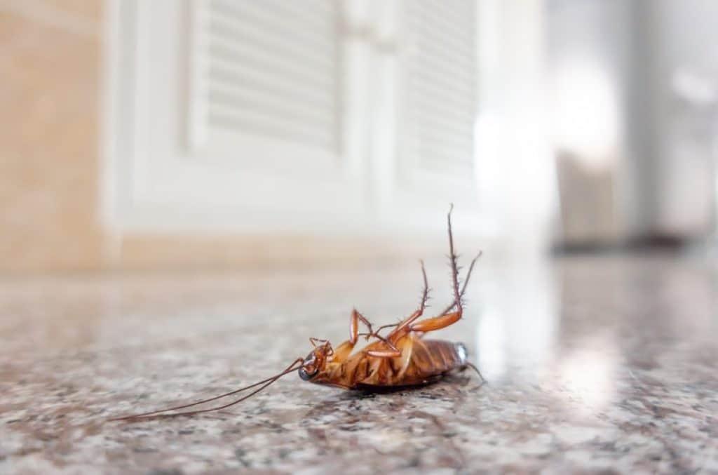 insetto morto in casa