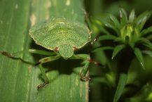 Eliminare gli scarafaggi dal proprio giardino in modo naturale