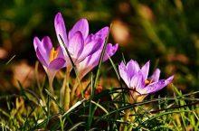 Febbraio: preparare il giardino e il balcone per le piante da fiore
